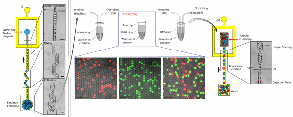 Droplet-based digital PCR microfluidic procedures for